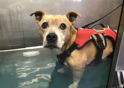 Canine Hydrotherapy Prices